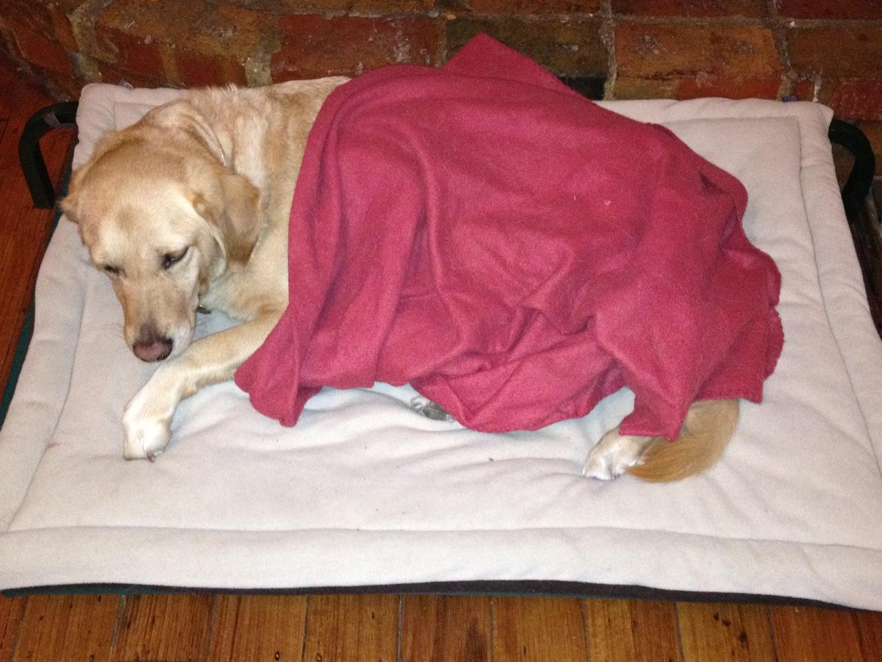 Britta having a nap