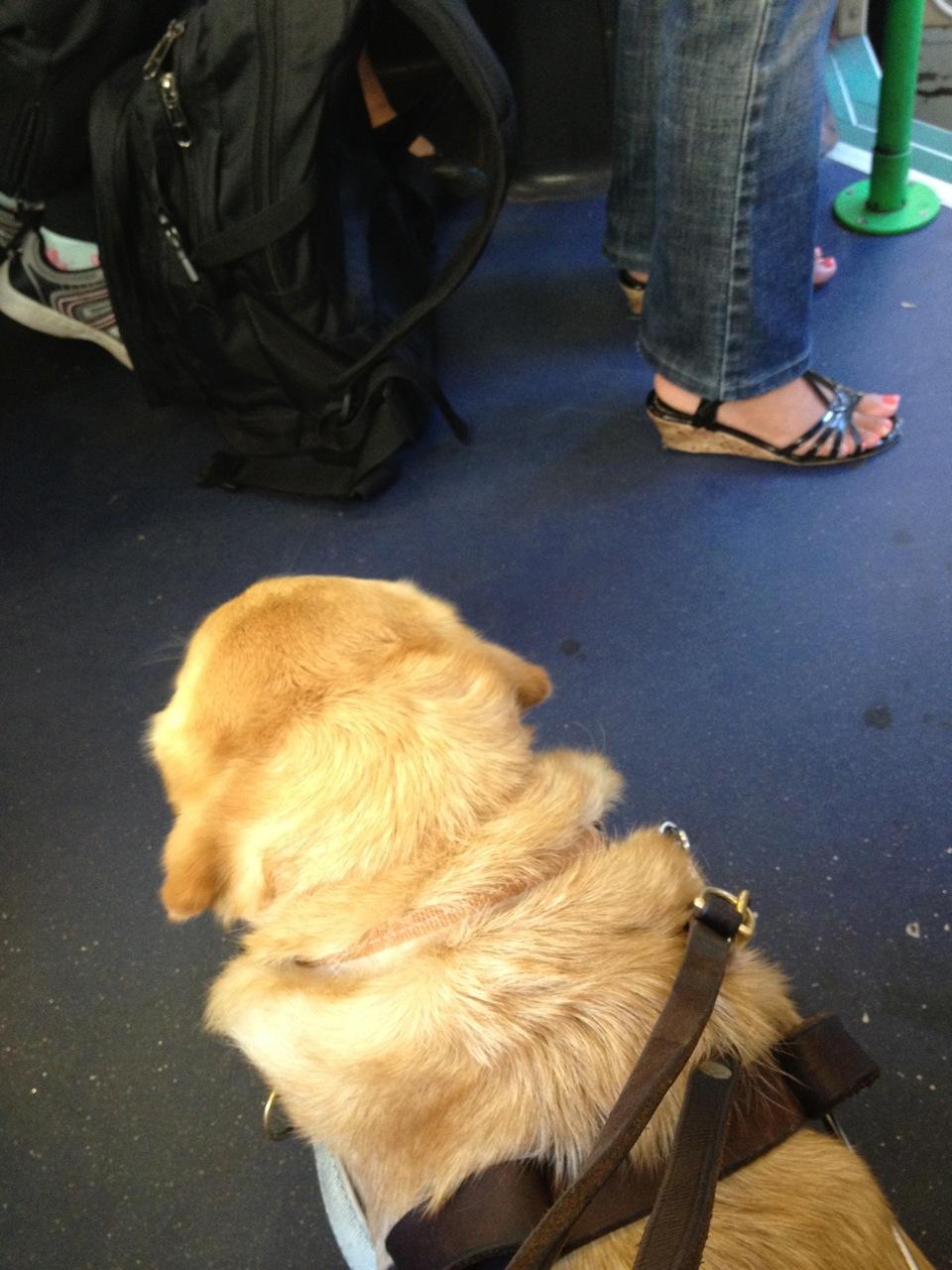 Britta on the tram