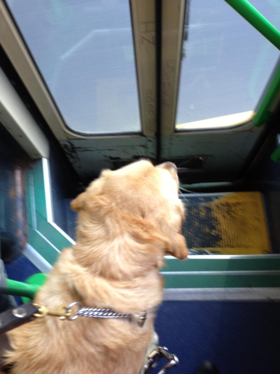 Britta leaving the tram